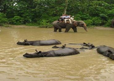 Kathmandu City and Chitwan Jungle Safari Tour